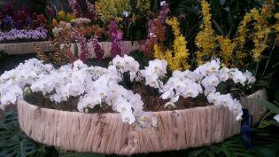 Orquideas feria flores medellin 2